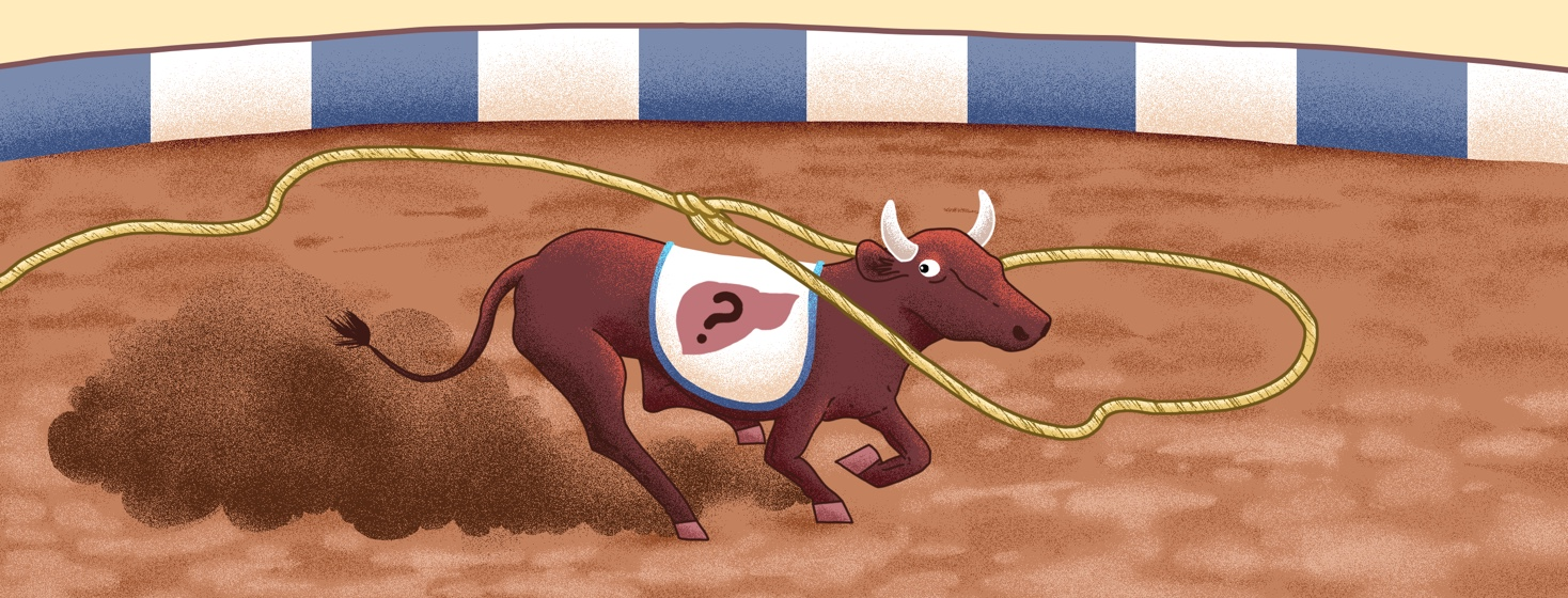 "A steer wearing a blanket that shows a liver with a ""?"" inside of it runs across a dirt floor, away from a lasso that has been tossed around its neck."