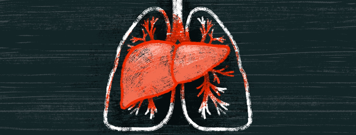 A pair of lungs is partially covered by a liver, which seems to be transferring its red color onto the lungs.