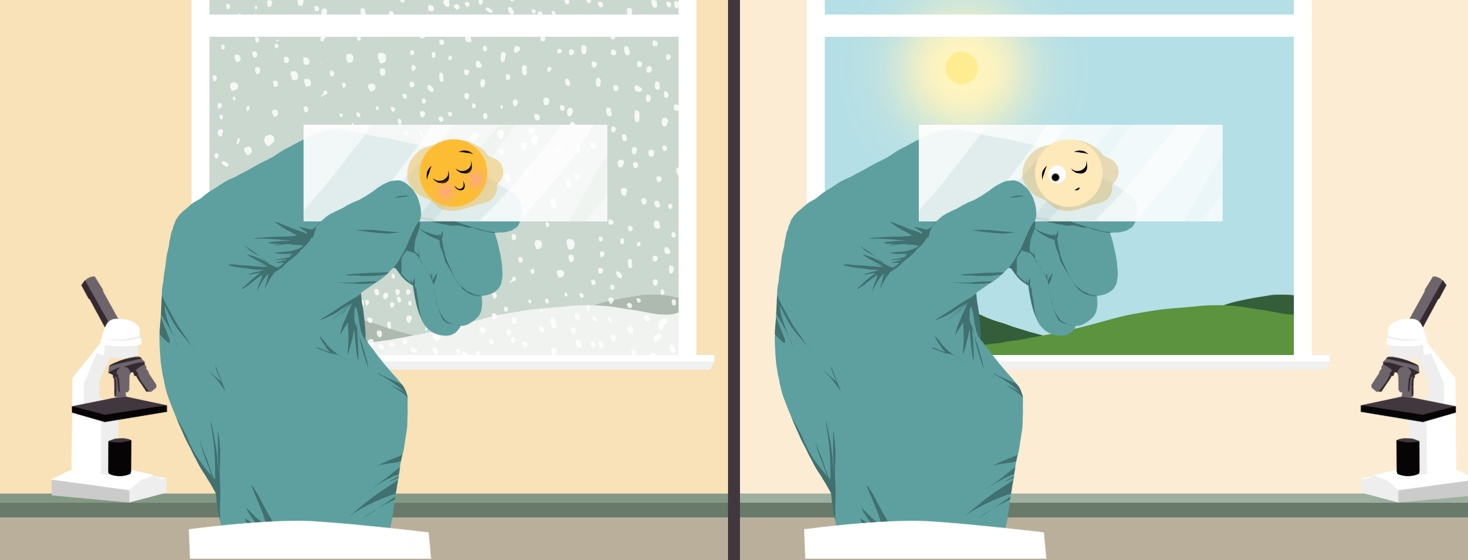 A hand wearing a medical rubber glove holds up a glass slide with a sleeping biopsy up to a window showing snow. The same scene is repeated but the biopsy now has one eye open and the window shows green grass and sunshine.