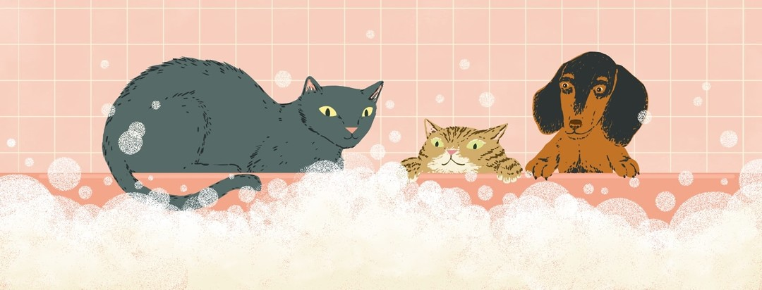 Two cats and a dachshund peer over the side of a bathtub into a bubble bath.