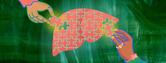 Two hands are adding the pieces to a liver-shaped puzzle.